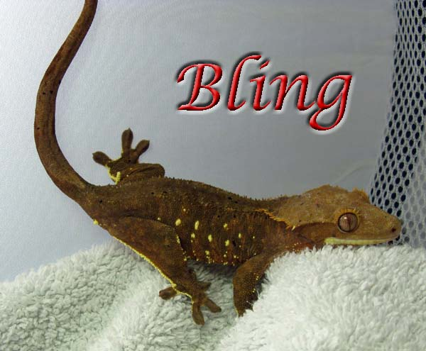 bling the gecko
