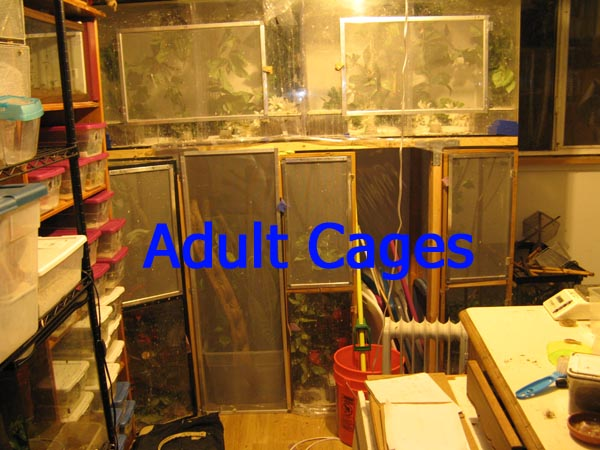 adult cages